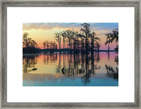 Sunrise, Bald Cypress Of Nc  Framed Print
