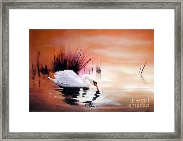 Sunrise On Swan Lake Framed Print
