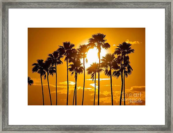 Sunrise Palms Framed Print
