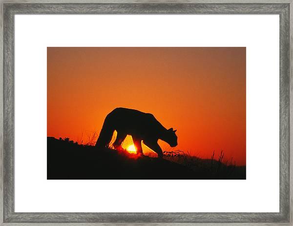 Sunrise Stalk Framed Print