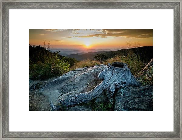 Sunrise Stump Framed Print