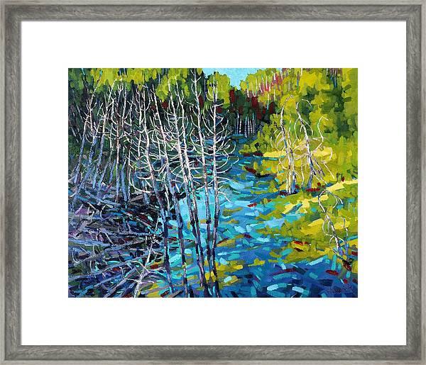 Sunrise Swamp Framed Print