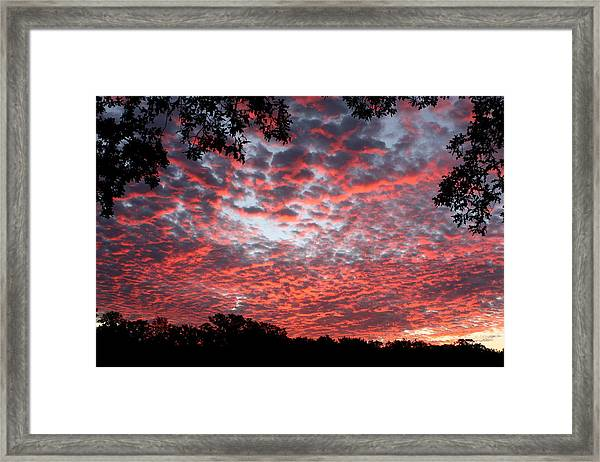 Sunrise Through The Trees Framed Print