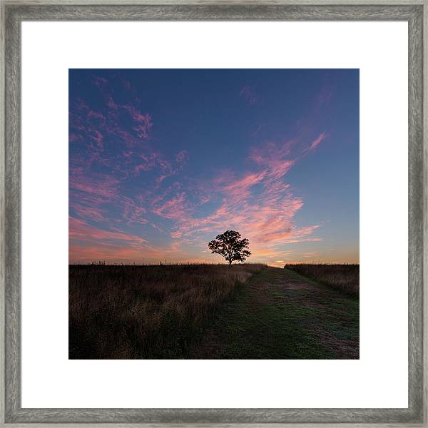Sunrise Tree 2016 Square Framed Print