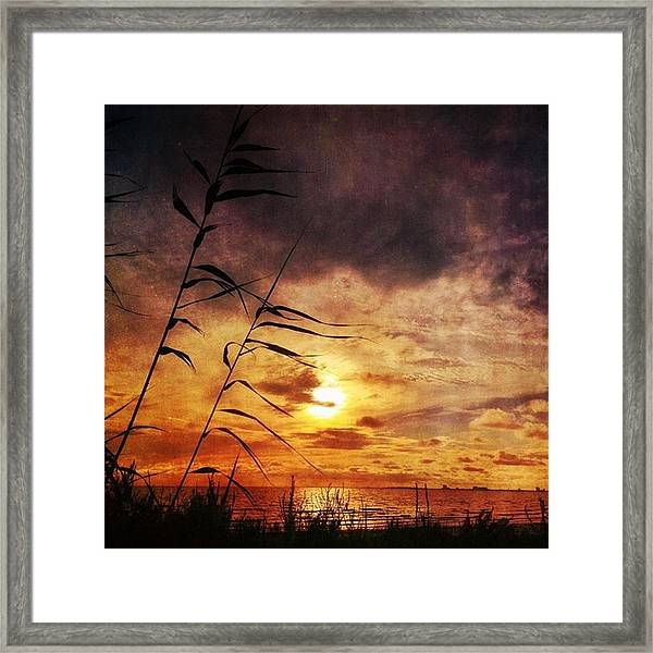 Sunset Among The Reeds #sunset Framed Print