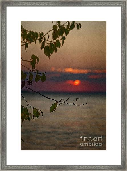 Sunset And Branches Framed Print