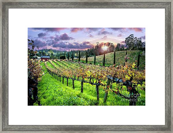 Sunset At The Palmers Framed Print