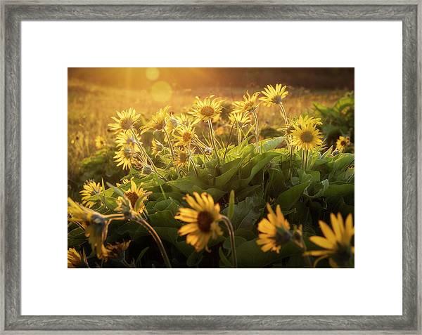 Sunset Balsam Framed Print