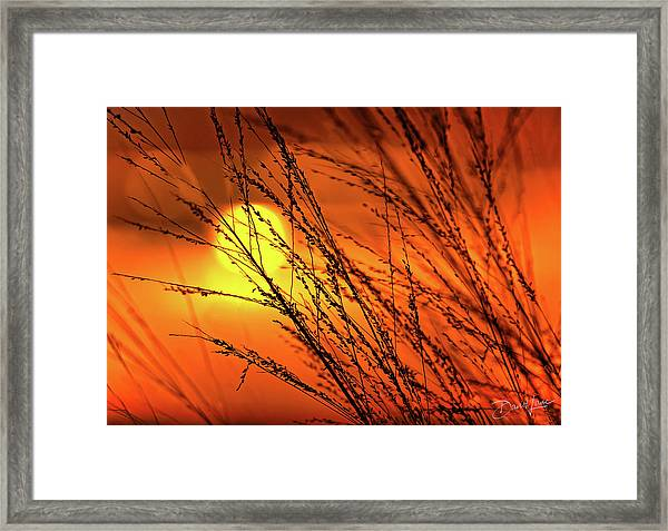 Framed Print featuring the photograph Sunset Breeze by David A Lane