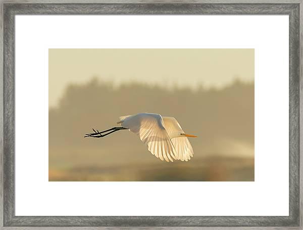 Sunset Egret Framed Print