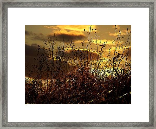 Sunset Grasses Framed Print