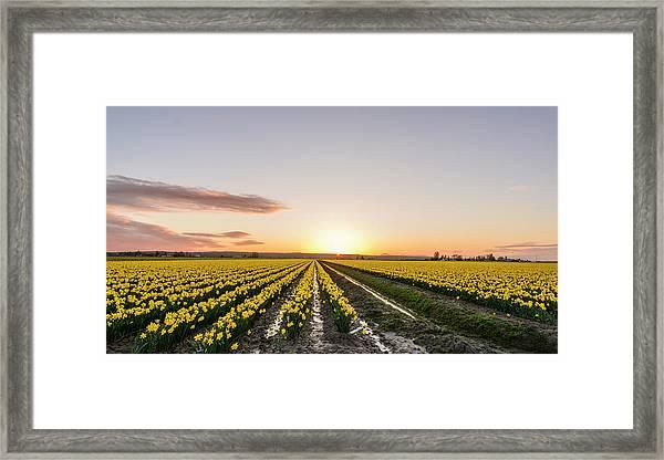 Sunset In Skagit Valley Framed Print