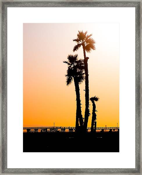 Sunset Palms Framed Print