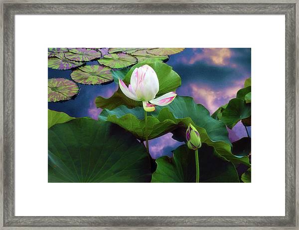 Sunset Pond Lotus Framed Print