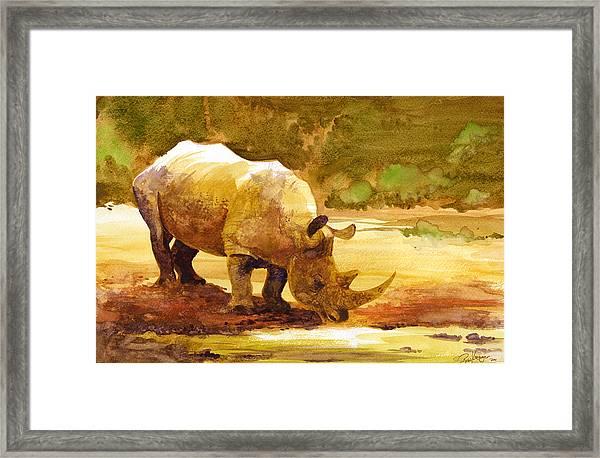 Sunset Rhino Framed Print