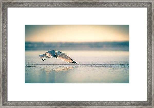 Sunset Seagull Takeoffs Framed Print