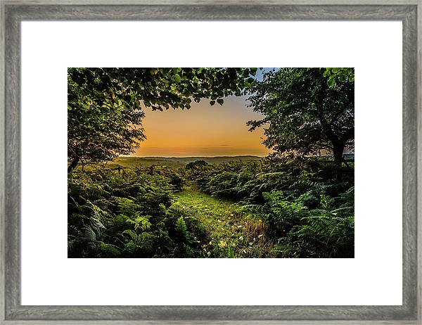 Framed Print featuring the photograph Sunset Through Trees by Nick Bywater