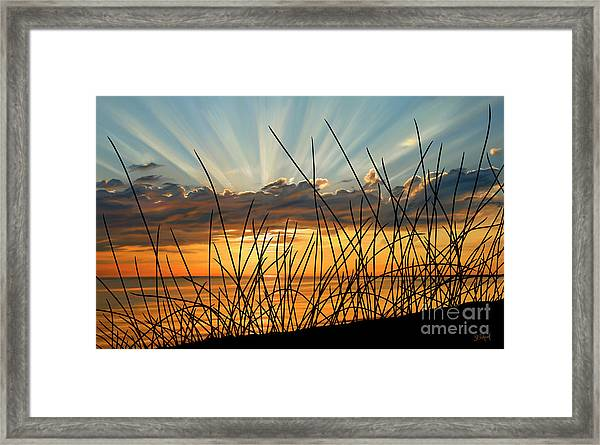 Sunset Thru The Grass Framed Print