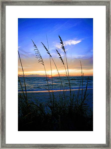 Sunset Thru The Sea Oats At Delnor Wiggins Framed Print