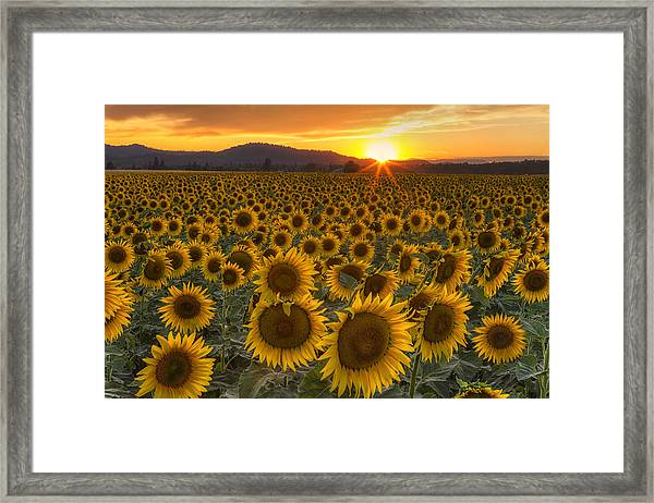 Sunshine And Happiness Framed Print