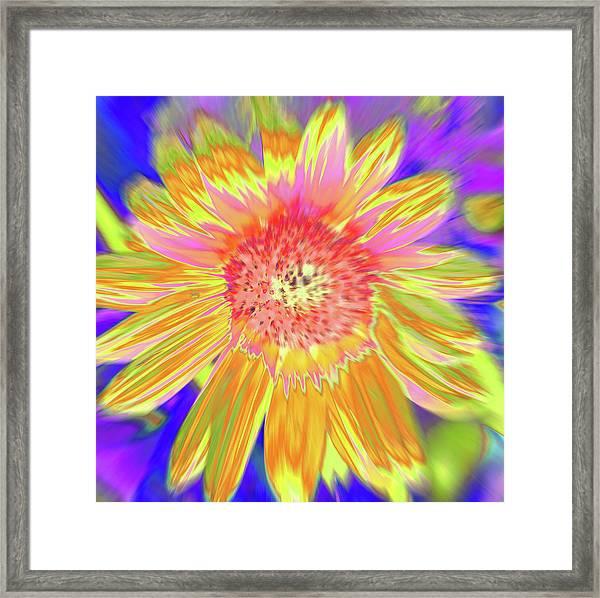 Sunsweet Framed Print