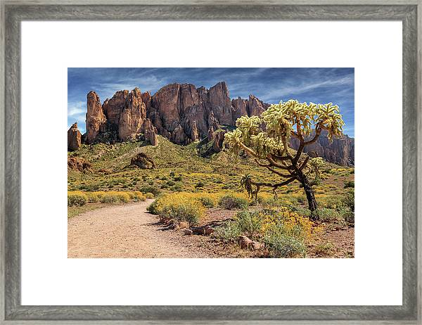 Superstition Mountain Cholla Framed Print