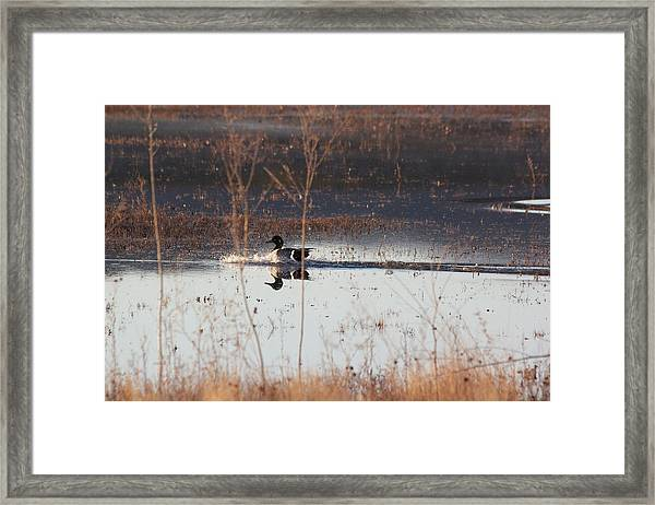 Framed Print featuring the pyrography Surfs Up by Michael Lucarelli