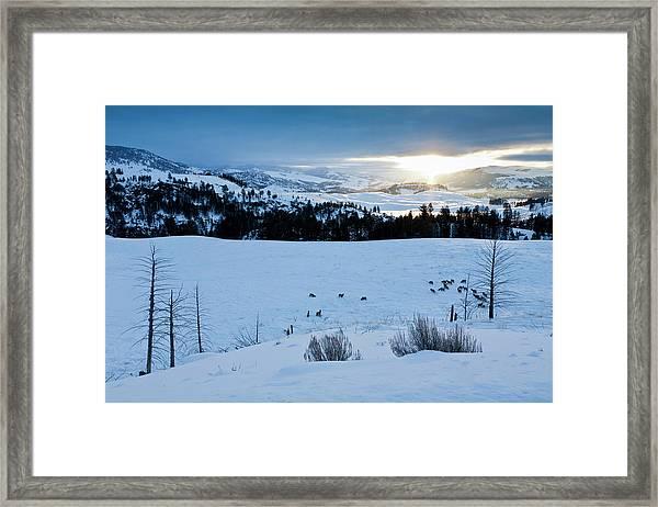 Surise Elk Herd Framed Print