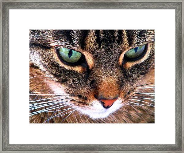Surmising Framed Print