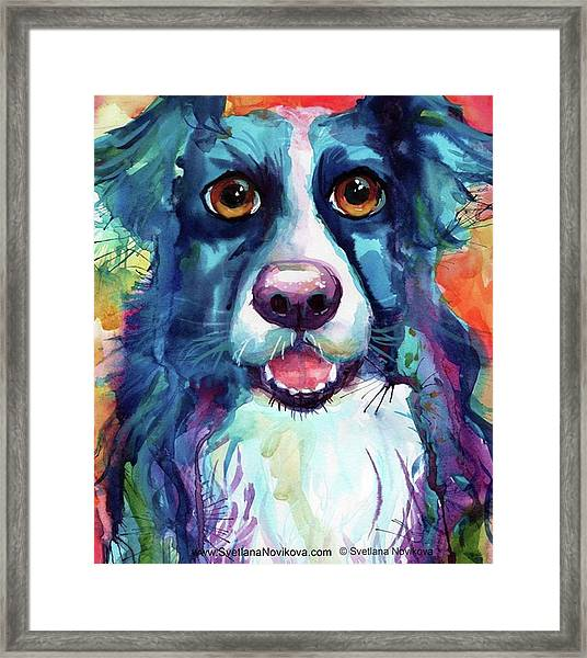Surprised Border Collie Watercolor Framed Print