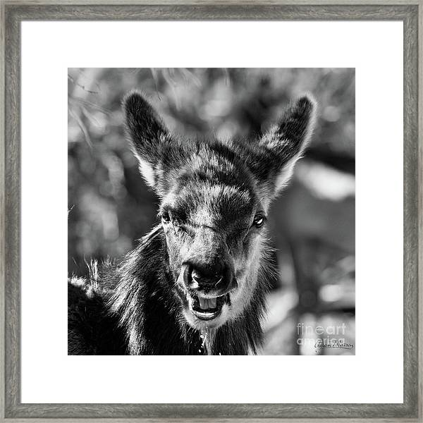 Surprise, Black And White Framed Print