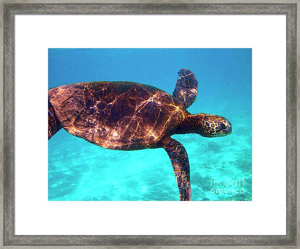 Suspended In Turquoise Framed Print