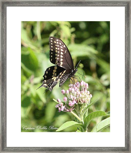 Swallowtail Butterfly 3 Framed Print