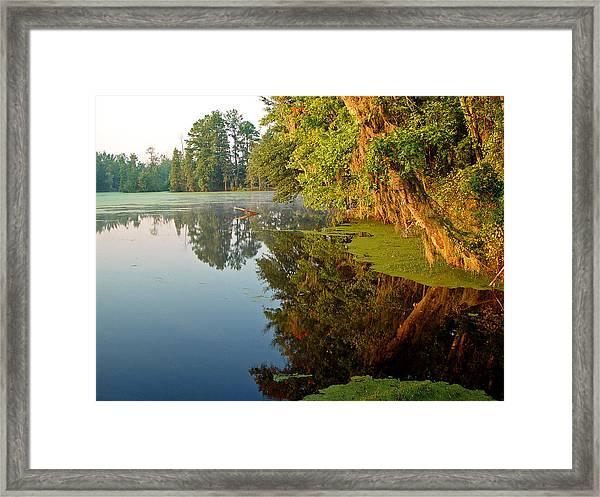 Swamp Pond Framed Print by Michael Whitaker