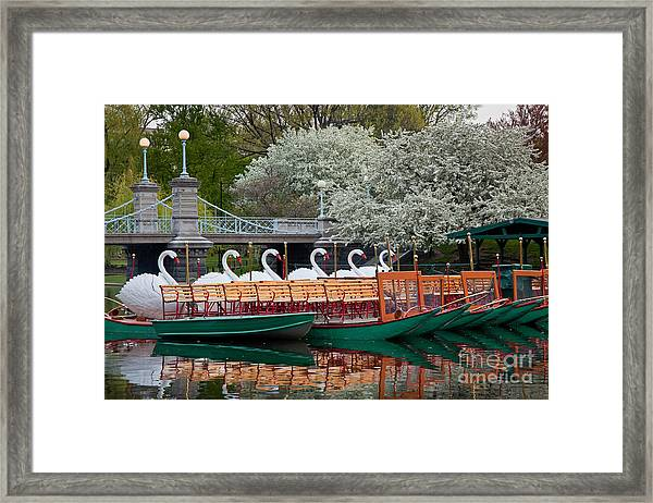 Framed Print featuring the photograph Swan Boat Spring by Susan Cole Kelly