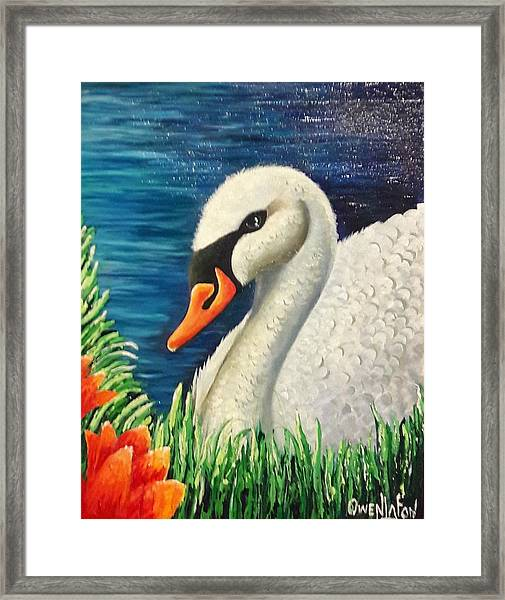 Swan In Pond Framed Print