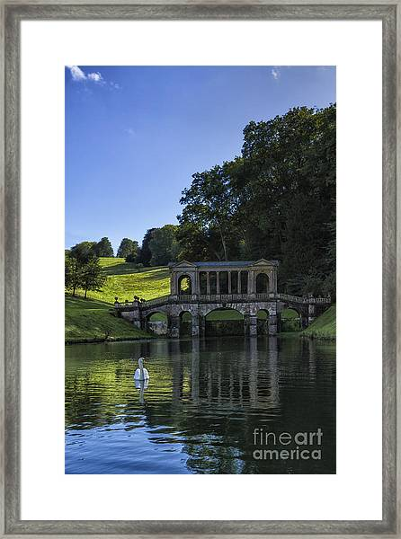 Swan In Prior Park Framed Print