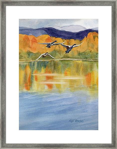 Swan Lake Revisited Framed Print by Kris Parins