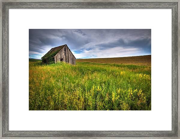 Swan Valley Framed Print