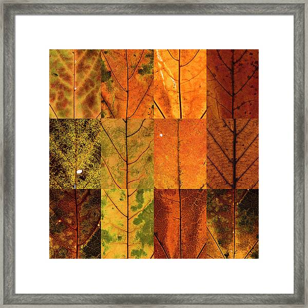 Swatches - Autumn Leaves Inspired By Gerhard Richter Framed Print