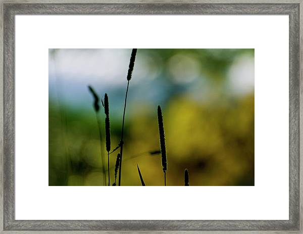 Swaying Persuasion Framed Print