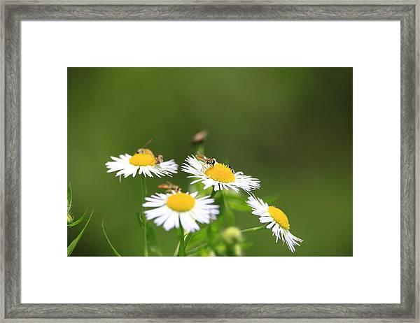 Sweat Bee Framed Print