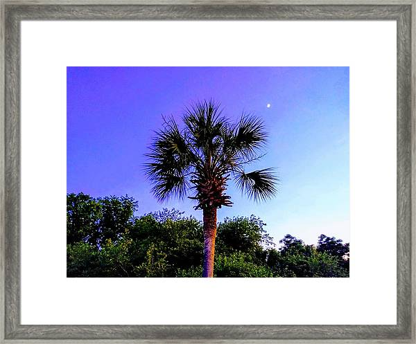 Sweet Dreams Carolinas Framed Print