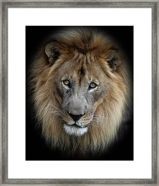 Sweet Male Lion Portrait Framed Print