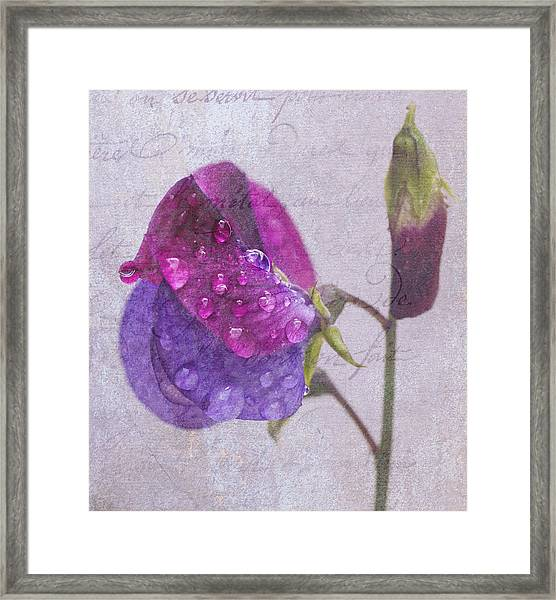 Sweet Pea Raindrops Framed Print