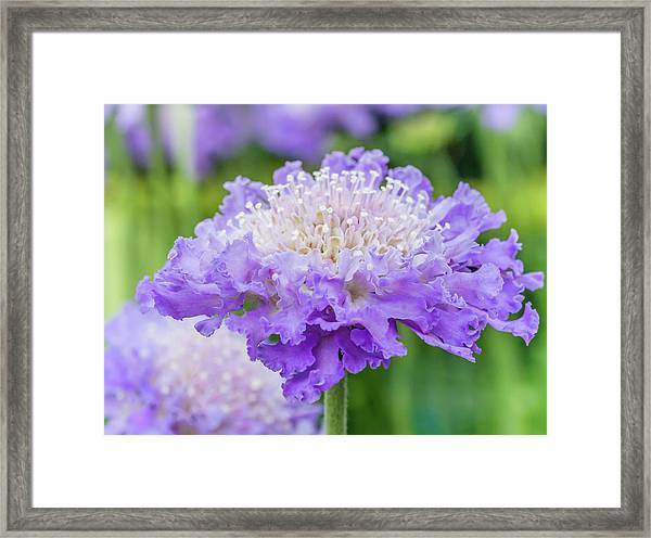 Framed Print featuring the photograph Sweet Petal by Nick Bywater