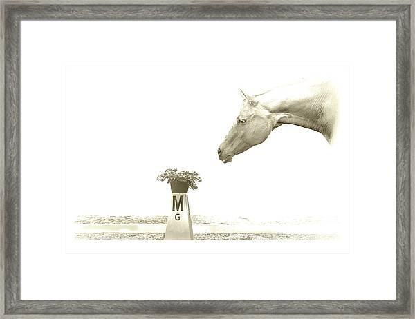Sweet Scent Of Days Gone By Framed Print