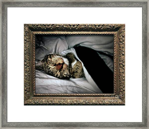 Framed Print featuring the photograph Sweet Simba Photo A8117 by Mas Art Studio