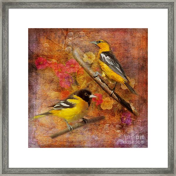Sweet Sweet Song 2015 Framed Print