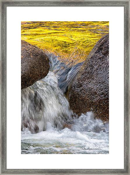 Swift Gold 6333 Framed Print